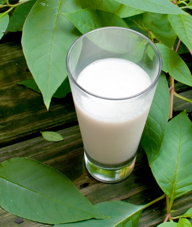 Organic milk with green leaves background vertical photo