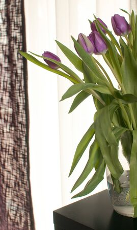 Purple tulips in interior design near window photo
