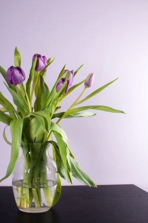 Interior design with lilac wall and purple tulip flower