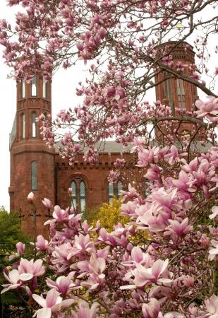 Magnolia blossom and smithsonian park