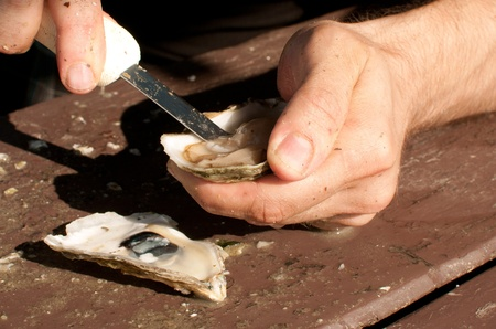 shuck: Shucking fresh oysters with knife outdoors