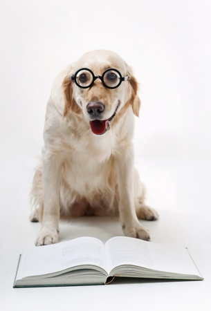 Shot of Golden Retriever with the book photo