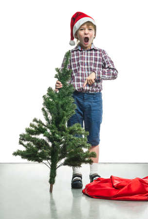 indignant: Little Santa with a Christmas tree in the hands of Stock Photo