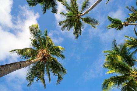 Palm sur le fond de ciel bleu