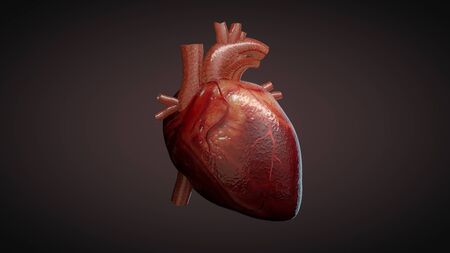3D illustration of a human heart