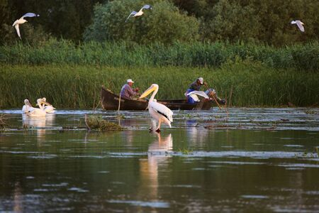 Danube Delta, Romania - June 16, 2019: Fishermen checking nets at dawn in Danube Delta Redakční