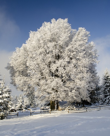 Beautiful landscape with now tree under blue sky Stock Photo