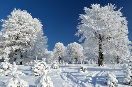 Mountain trail between snowy trees in Alps