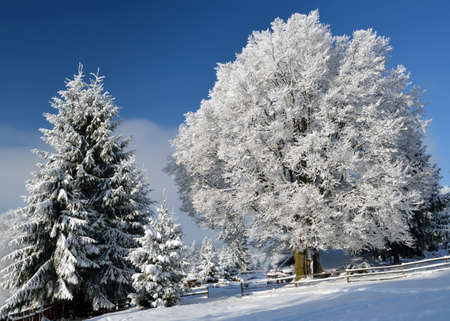 Beautiful winter landscape with snowy trees in Alps mountains Stock Photo