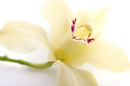 High key orchid isolated on white background photo