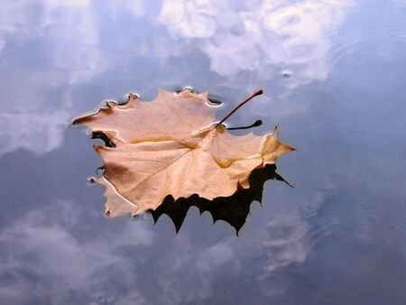 Autumn leaf in water with clouds reflections