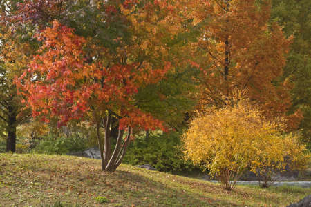 Full of colors autumn park aspect.Excelelnt image for a seasonal background in your designs. Stock Photo - 1658415