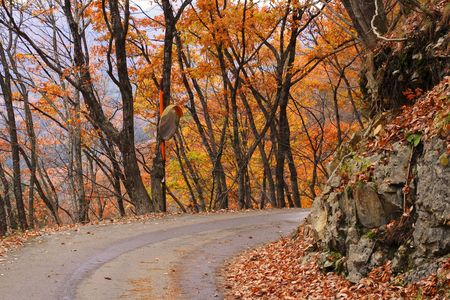 Curve road in an autumn forest-beautiful fall colors. Stock Photo - 2398169