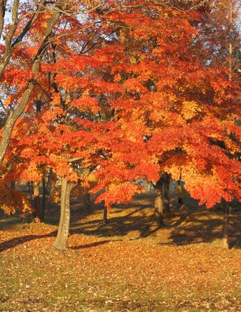 Beautiful autumn colors ina Japanese park with maple trees Stock Photo - 2398168