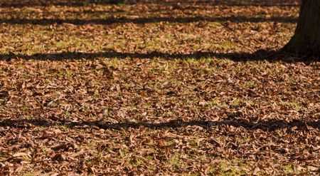 Shadows of trees in an autumn park. Stock Photo - 3513696