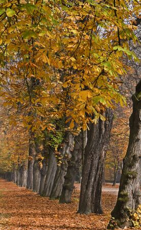 Perspective in a beautiful autumn park. Stock Photo - 3814527