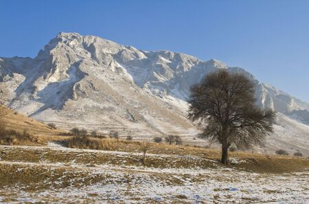 Mild winter landscape with a lonely bare tree in the Trascau Mountains,Romania.The tree is in the main focus. photo