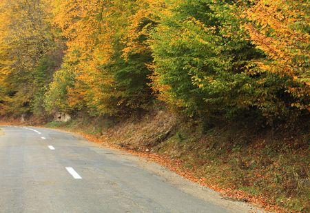 Road near a beautiful colorful forest in autumn. photo