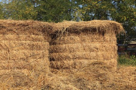 haycock: Storage with a pile of haystacks