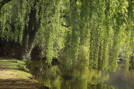 riverside tree: Beautiful place in a park on a riverside under the willow tree. Stock Photo