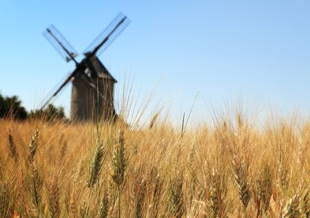 eolian: Out of focus image of a traditional wooden windmill seen through a wheat field.