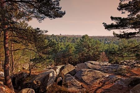 developed: Puesta de sol en el bosque de Fontainebleau en la primavera.Este bosque franc�s es un conocido parque natural nacional para sus cantos rodados con varios sahpes y dimensiones. Es la mayor y m�s desarrollado Bulder (un estilo de escalada en roca) son Foto de archivo