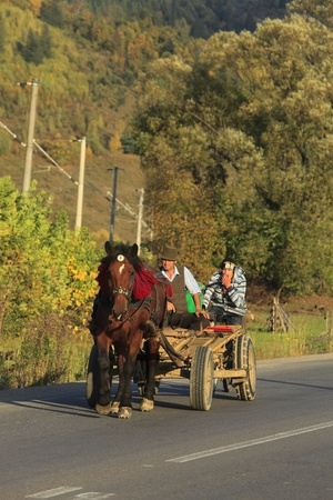 horse traction: Gura Humorului,Romania,October 5th 2009: A horse pulling a wagon with villagers in Bucovina,Romania.Wagons on Romanian roads are a kind of landmark.