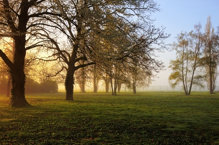 Sunrise in a yard with trees in spring. Stock Photo