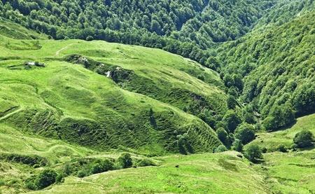 Plateau volcanique situ� dans le Massif Central entre le Puy Griou et le Puy Mary dans la r�gion Auvergne-Cantal de la France.L Massif central est une r�gion �lev�e dans le sud-centre de la France, compos� de montagnes et de plateaux.The r�gion enti�re contient le LAR Banque d'images - 10453165