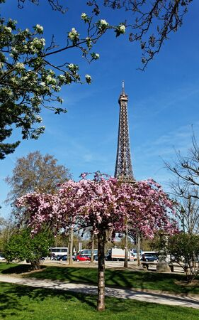 vicinity: Image during the spring, of the Eiffel Tower from a beautiful park in the vicinity
