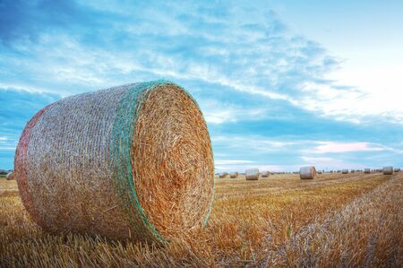 Image of a field with hay bales at the sunset  photo