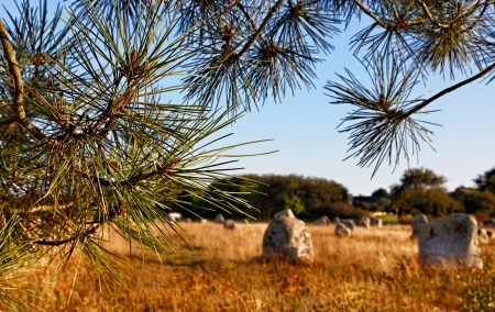 alignments: Image at the dusk of megalithic monuments menhirs ,framed by some pine branches, in Carnac,  Brittany in nortwest of France. The focus is selective on the tree. Stock Photo