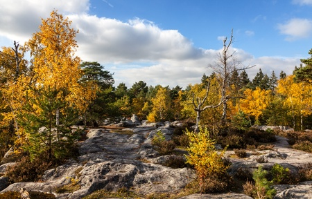 Beautiful autumn landscape in the Fontainebleau forest located in France close to Paris. Stock Photo