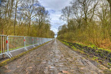 empedrado: Imagen de la famosa carretera de adoquines desde el bosque de Arenberg (Pave d