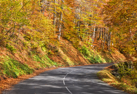leaves green: Beautiful road in a colorful autumn forest.