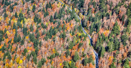fall trees: Aerial view of a scenic road passing through an autumn forest in The Central Massif,France. Stock Photo