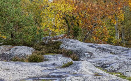 broadleaved tree: Beautiful fall landscape with colorful trees and rock located in Fontainebleau Forest in Central France. Stock Photo