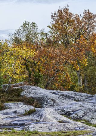 broadleaved tree: Beautiful fall landscape with colorful trees and rocks located in Fontainebleau Forest in Central France. Stock Photo