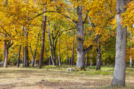 Image of a beautiful yellow forest in autumn