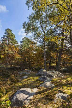 Beautiful fall landscape with colorful trees and rocks located in Fontainebleau Forest in Central France. Stock Photo