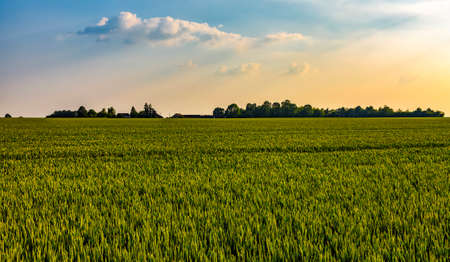 Filed landscape located in the agricultural heart of France, Beauce region.