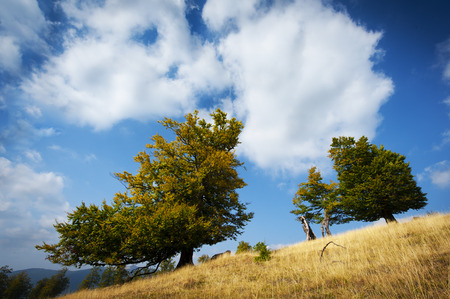 trees on hill in summer