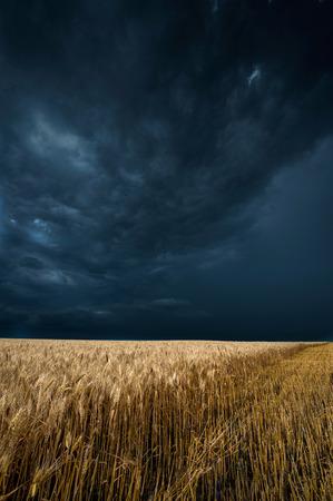 Storm dark clouds over field Stok Fotoğraf