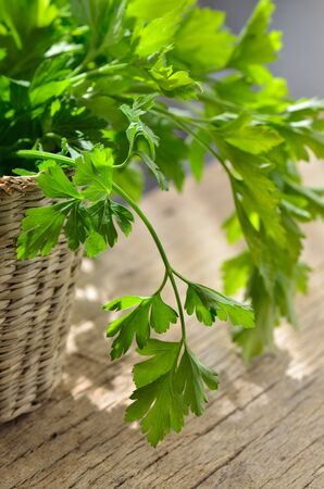 green organic parsley on wooden table