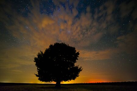 lonely tree on field by night Stok Fotoğraf