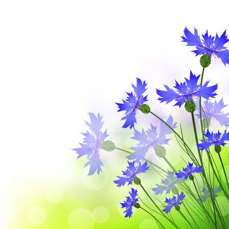 cornflowers: summer cornflowers with copyspace for your text