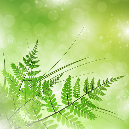 green fern with grass over magic light background Illustration