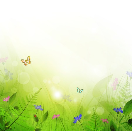 summer meadow with flowers and sun shine Stock Vector - 9093432