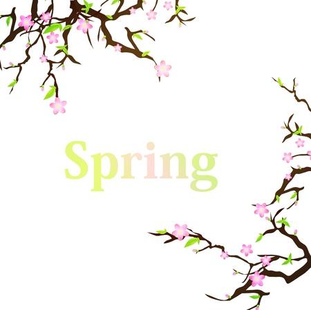 Frühlingshintergrund mit Kirschblüte und copyspace Vektorgrafik