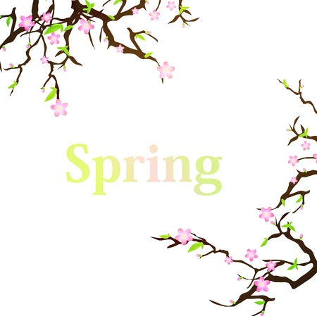 blossoming: spring background with sakura and copyspace